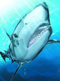 Top 10 Deadliest Sharks SC